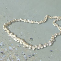 Free Seashell Necklace