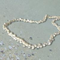 Expired: Free Seashell Necklace